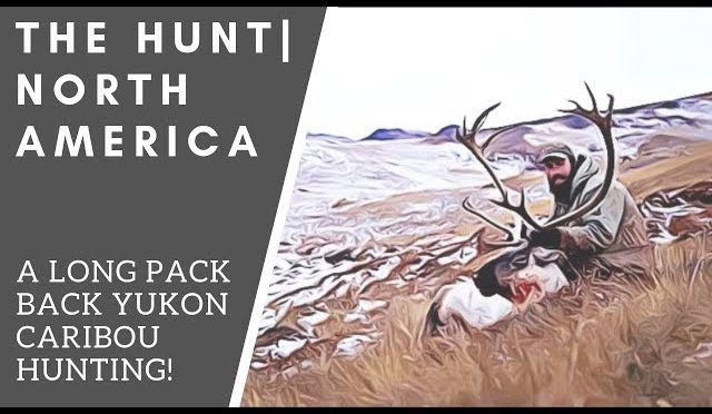 A Long Pack Back Caribou Hunting in the Yukon   THE HUNT