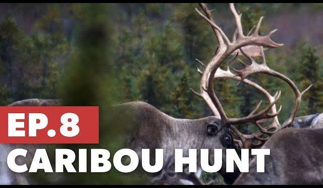 Caribou Hunt pt. 3 – The Mountain Project Season 5:E8