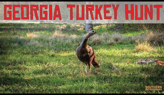 GEORGIA TURKEY HUNT WITH CLOSE PROXIMITY TV