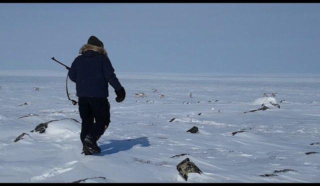 Spring Caribou Hunting