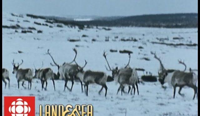 Land & Sea: Caribou hunt