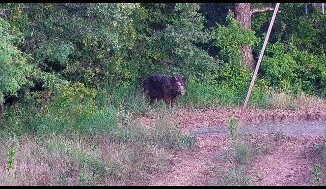 The Big Hog showed up again..*Changes Happening*