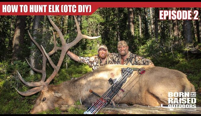 Top Five 6 5 Creedmoor Elk Youtube - Circus