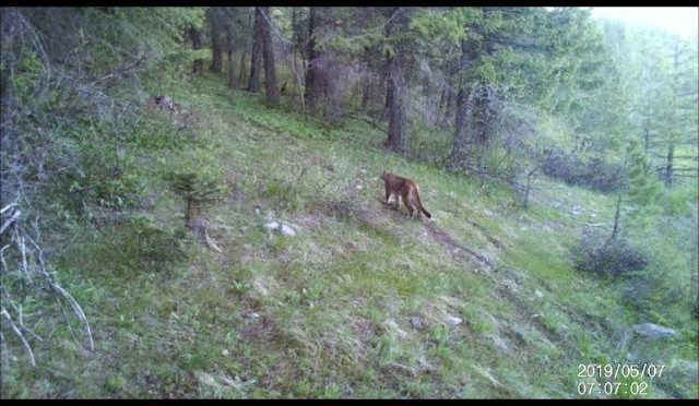 Trail Camera Clips July 8, 2019