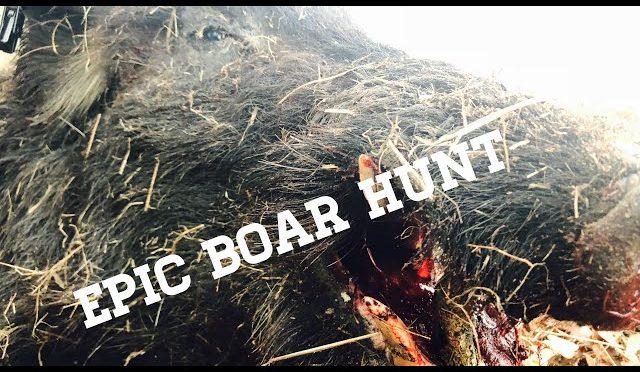 BOW HUNTING A BEDDED BOAR HOG!