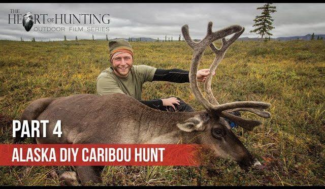 CARIBOU DOWN! – Alaska DIY Caribou Hunt (Part 4 of 5)