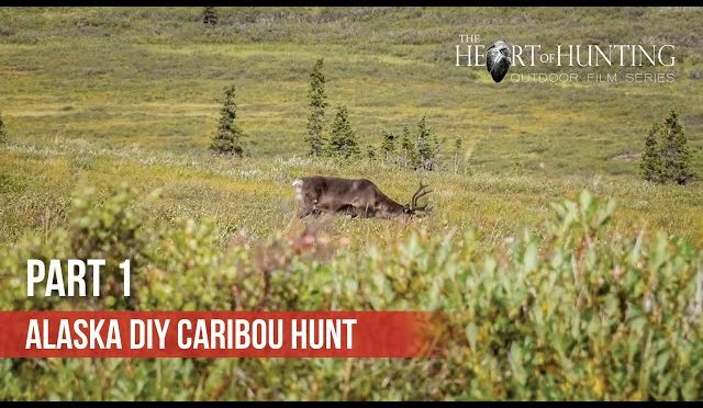 CARIBOU SCOUTING – Alaska DIY Caribou Hunt (Part 1 of 5)