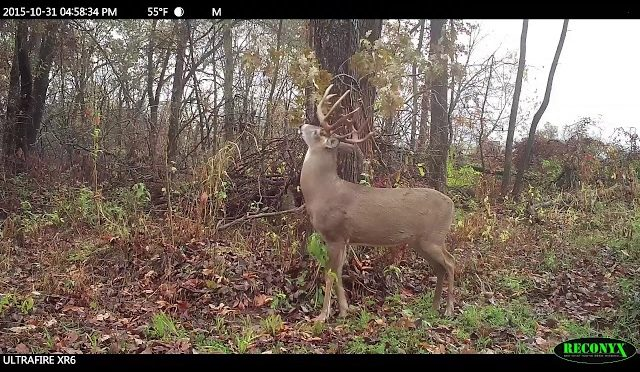 Mock Scrape Secrets for Deer Hunting Success