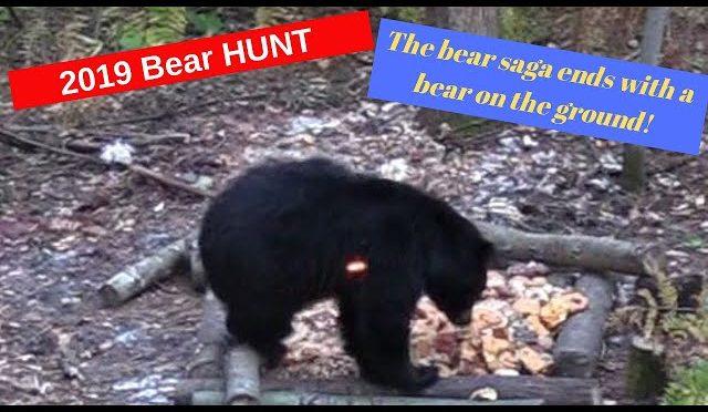 Archery Minnesota bear saga