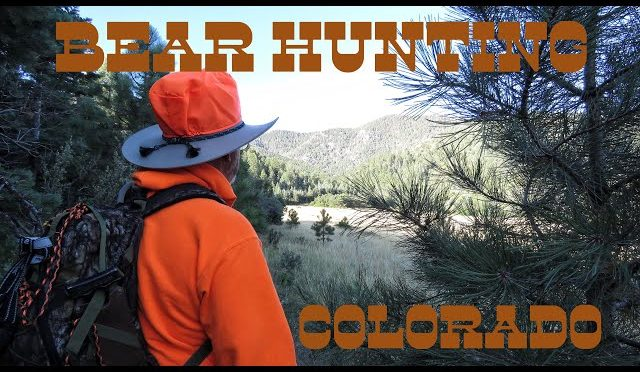 Bear Hunting In Colorado