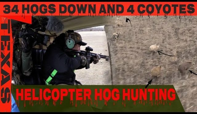 HELICOPTER HOG HUNTING//THE DIRT ROAD OUTDOORS TV CREW HUNTING HOG FROM HELICOPTER