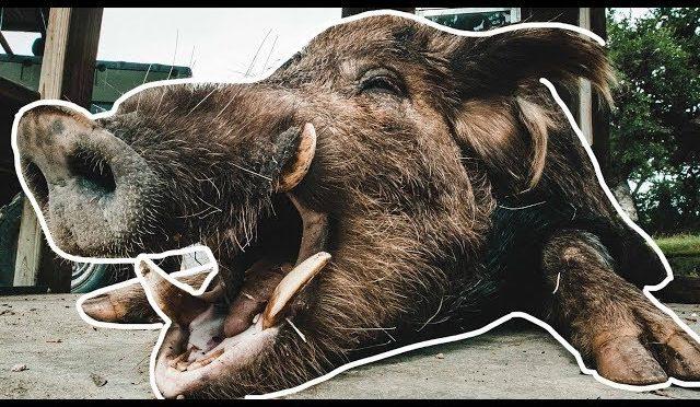 Hog Hunting in Texas | DOUBLE HEADSHOT