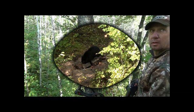 Stage 4 bear hunt