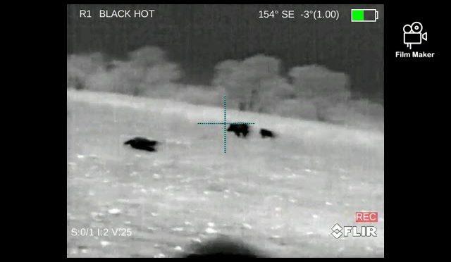 Texas Hog Hunt Sept