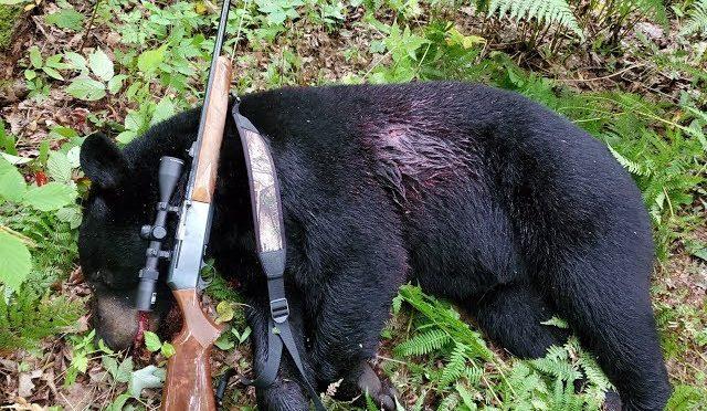 Tua Dais MN 2019-Bear Hunting MN 2019