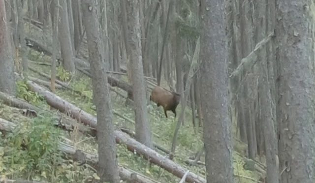 Archery Elk Hunting Rock You Out Version