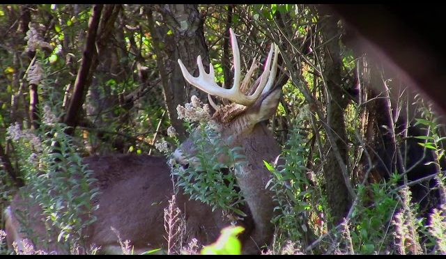 Bone Wild TV   Illinois Deer Hunting