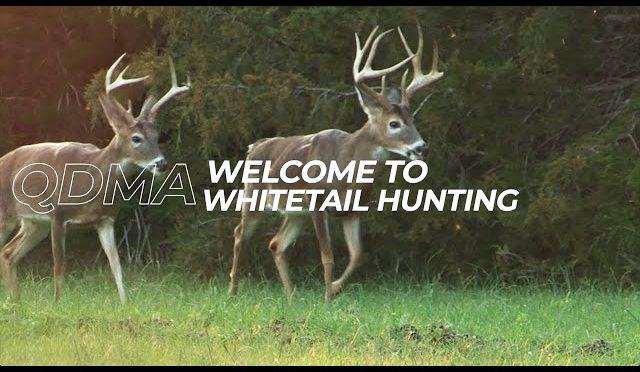 Ep. 1 – Welcome to Whitetail Hunting | QDMA's Deer Hunting 101