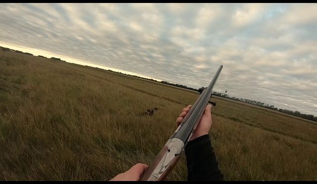 GoPro Pheasant Hunting at Section 17 North Dakota