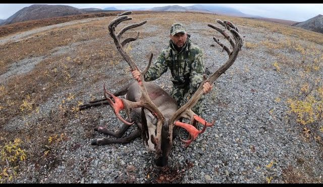 2019 Big Bull Caribou Hunt