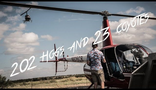202 Hogs and 23 Coyotes on Helicopter Hunt with Pork Choppers Aviation!