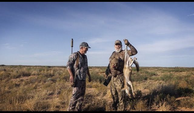 Hiding Coyote