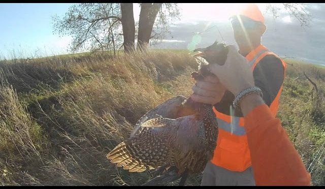 Kimball SD Pheasant hunt 2019