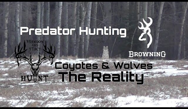 Solo Predator Hunting – Wolves and Coyotes (The Reality)