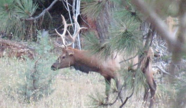 2019 Archery Elk ep2