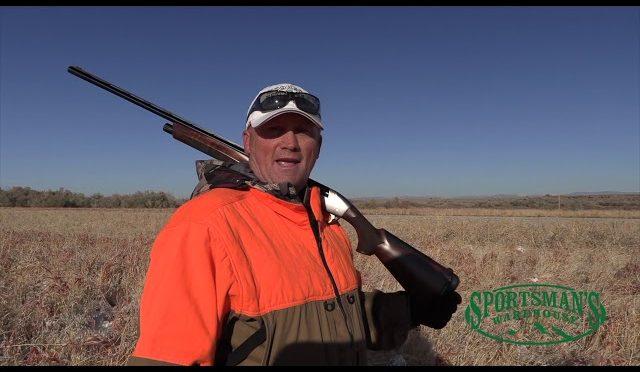 Pheasant Hunting Central Utah