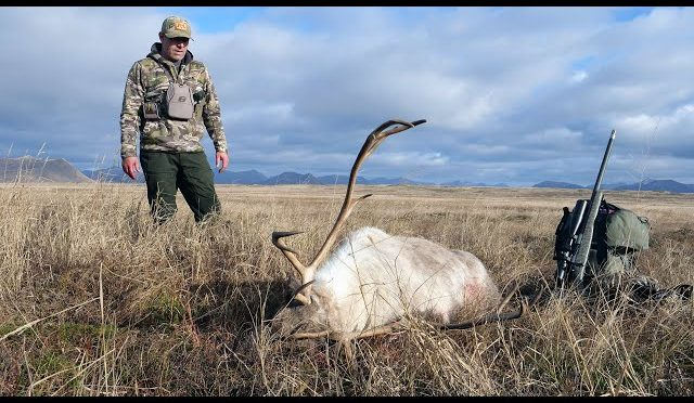 "SOLO HNTR 10.5 ""FINDING MEAT"" Kodiak Island Blacktail Deer and Caribou Part 1"