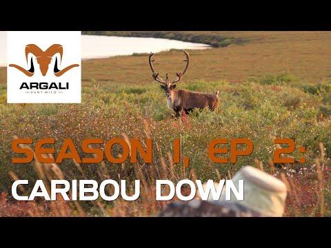 Argali Season 1, Episode 2: Alaska Caribou