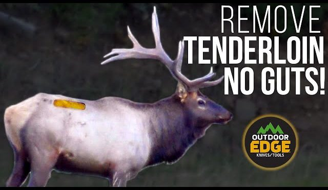 HOW TO get TENDERLOINS WITHOUT GUTTING! Hunting Tip