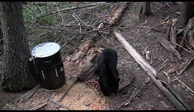 The one that got away. Archery black bear hunting spring 2018