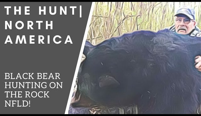 Black Bear Hunting On The Rock! NFLD | THE HUNT