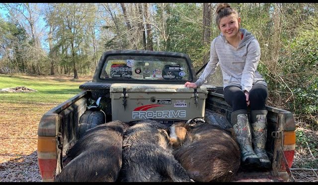 Hog Trapping & Feeding Families – We Caught 5 More Pigs out of the SAME Trap!