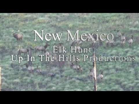 New Mexico Gila Mountain Archery Elk Hunt 2018