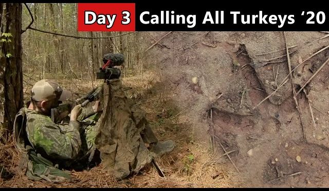 Tracking Down A Mississippi Gobbler – Public Land Turkey Hunting – Calling All Turkeys