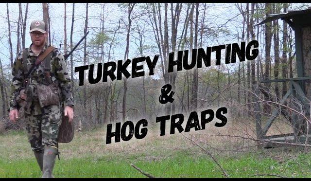 TURKEY HUNTING & FRESHENING HOG TRAPS 🤔🤔🤔 at Hollis Farms